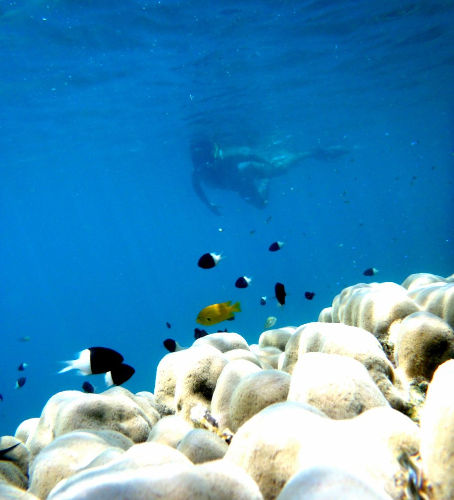 In the Red Sea in Marsa Alam, you are never alone