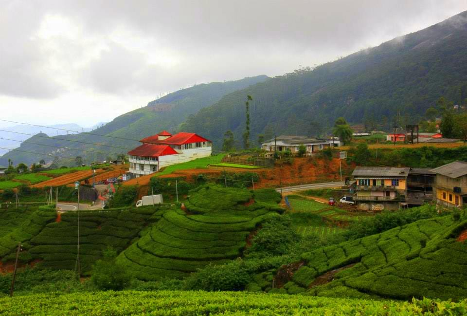 Tea estates around Nuwara Eliya