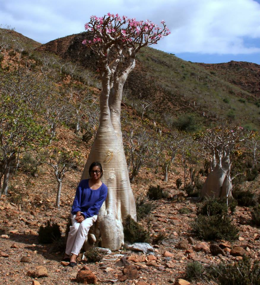 A desert rose tree in Wadi Dirhur