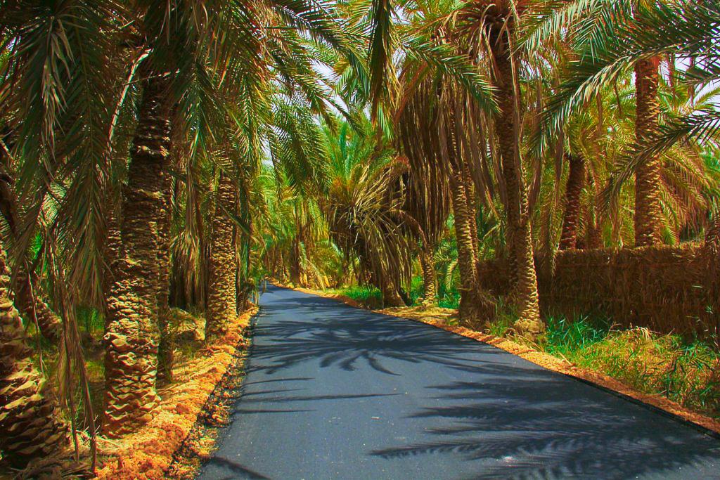 bahariya oasis is a beautiful date palm-shaded oasis