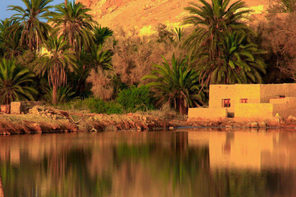 Stunning oasis houses at Siwa