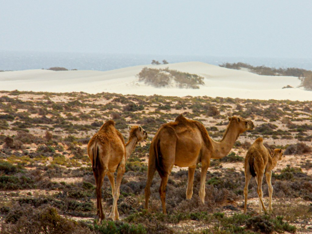 The dry arid plains of Nogid