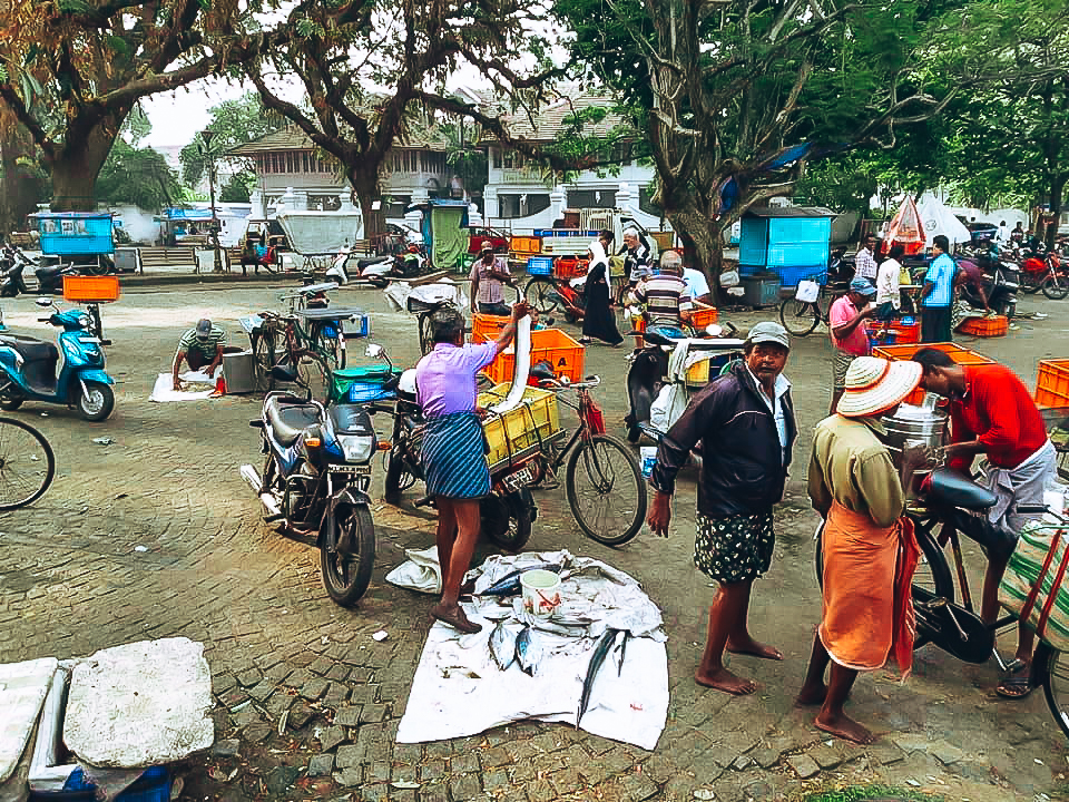 fort kochi morning fish market