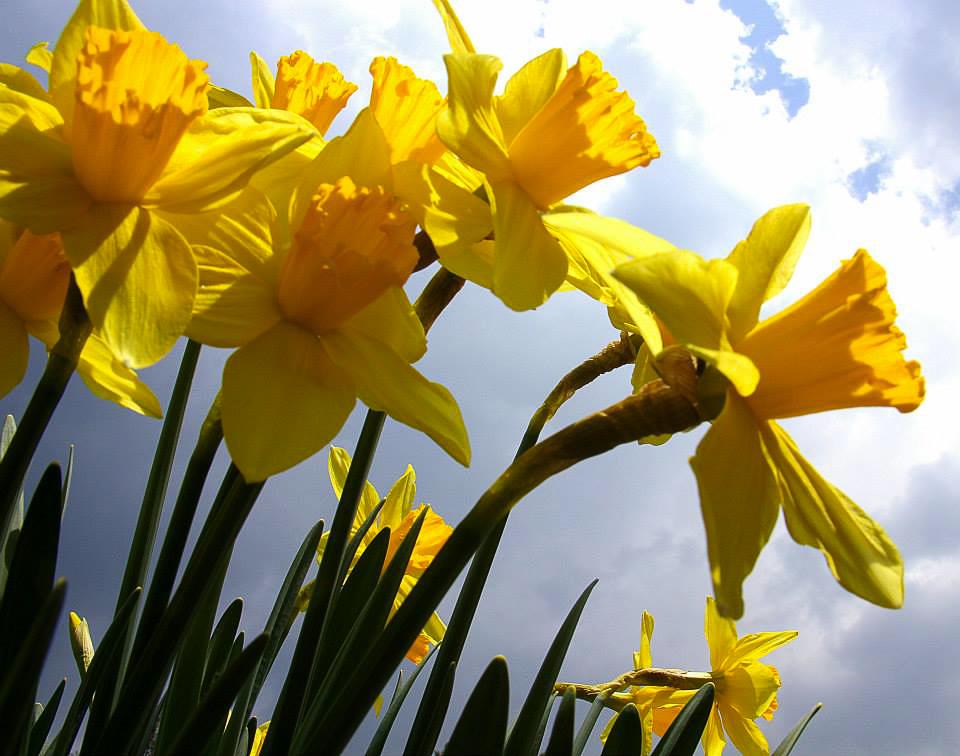 Spring flowers in bloom in Daksum