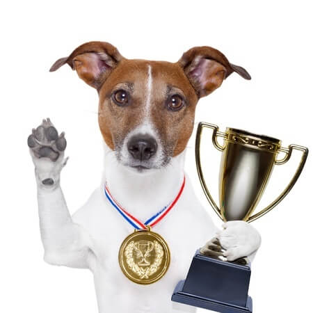 cute dog holding trophy with gold medal around neck