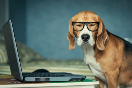 hipster dog wearing black rim glasses in front of a laptop