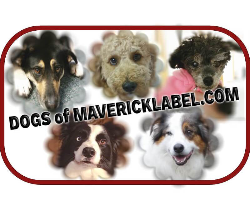 Dogs of MaverickLabel, Part 2