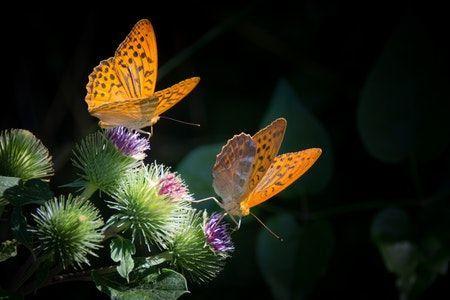 Mariposas posando en las flores en la naturaleza