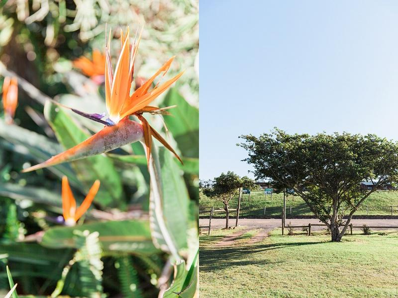 Strelitzia in the Gardens at Lake Eland Game Reserve