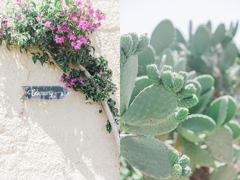 Bougainvillea growing up a wall and cacti at Villa Rosa on Kefalonia