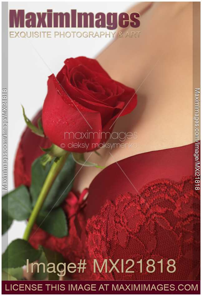 Stock Photo Woman Holding A Red Rose MaximImages