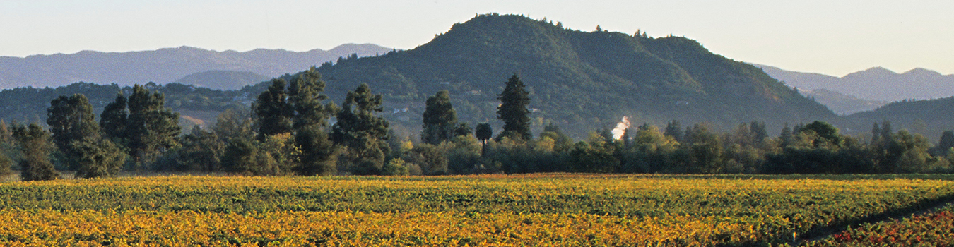 A view of Fitch Mountain in Healdsburg, California. The photographer apparently took this shot from some vineyards in the west, probably near West Dry Creek road.