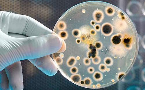 Pengertian Inkubasi Mikrobiologi