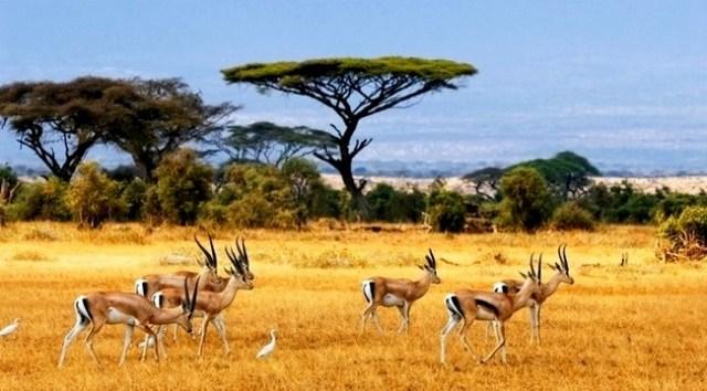 Macam-Macam Ekosistem