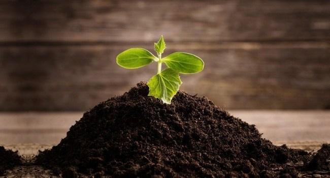 Tanah dan tumbuhan