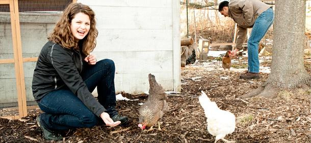Chicken-Entrepreneur-dan-Karakteristiknya