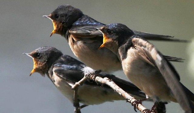 Usaha Budidaya Ternak Burung Walet