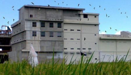 Kandang Burung Walet