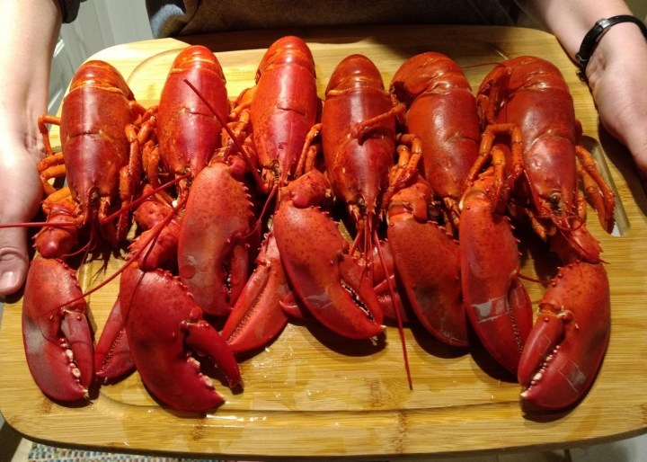 Six cooked lobsters from Maine.