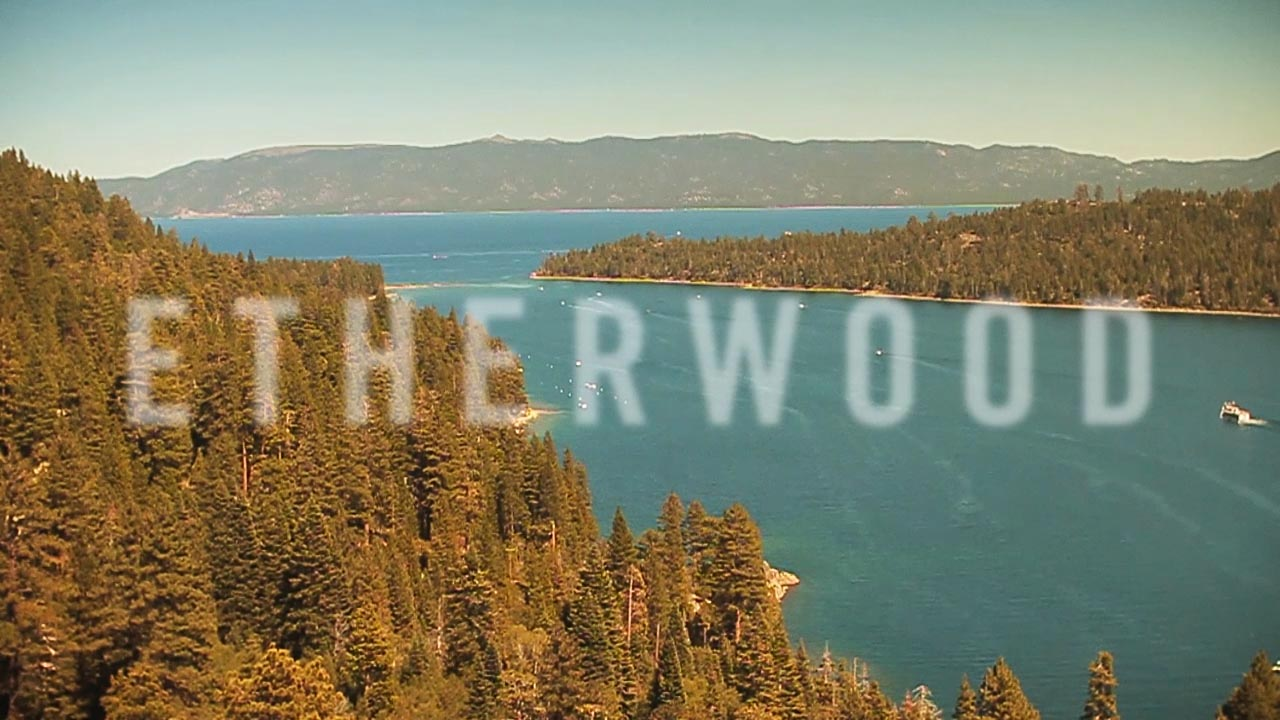 Etherwood Blue LEaves Videos by Max Palmer Visuals