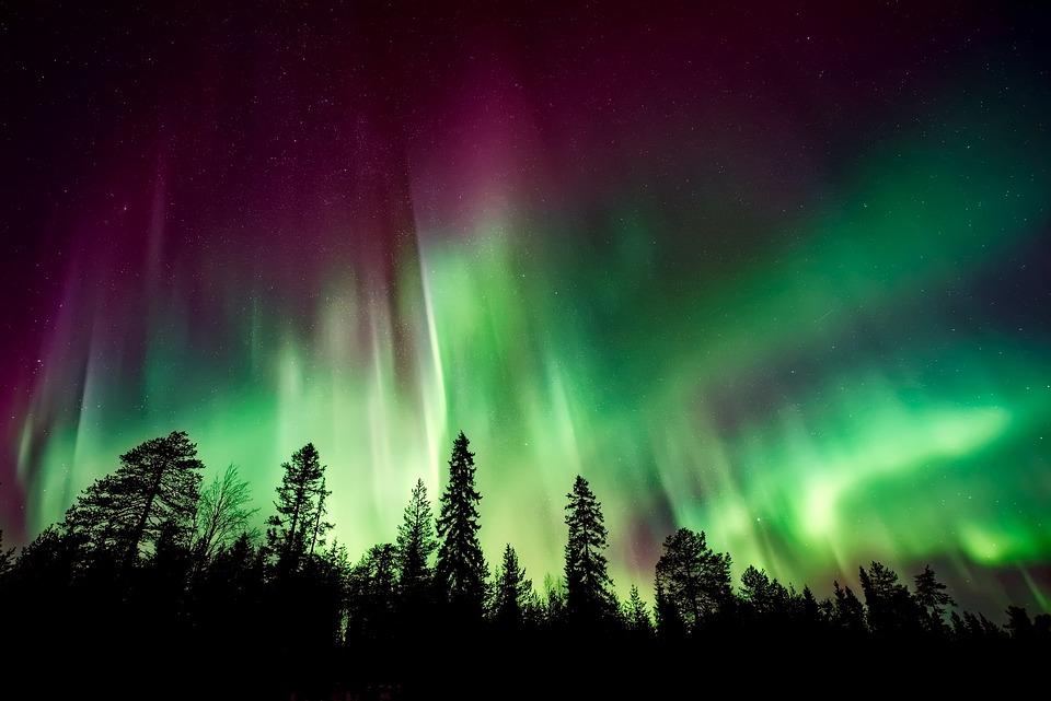 Free Photo Aurora Borealis Woods Forest Northern Lights