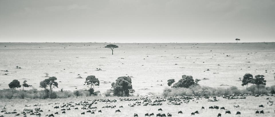 Maasai Mara Kenya Landscape Black White Freetouse