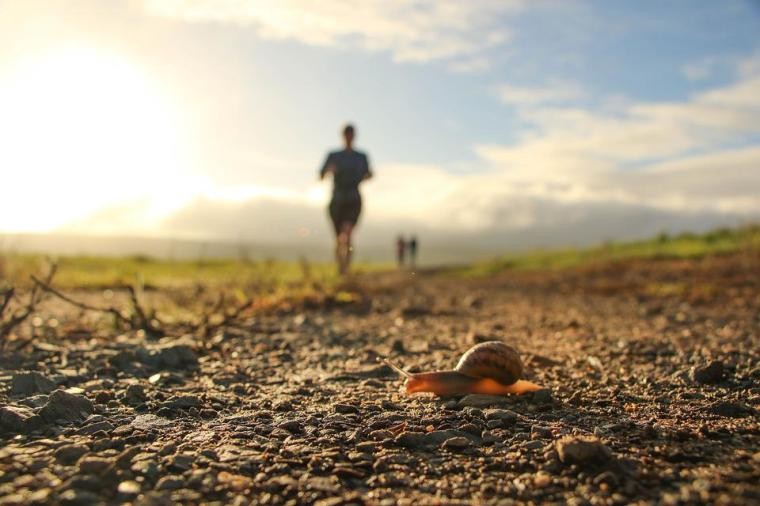 Free photo Snail Runners Trailrun Winner Athlete Running - Max Pixel