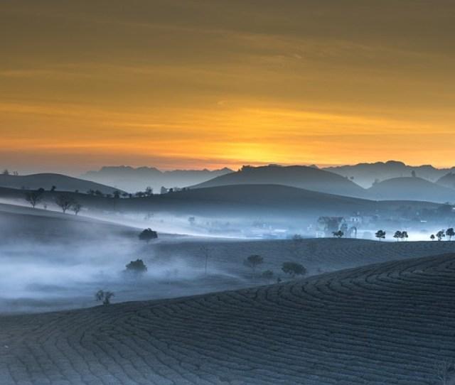 Tea Plantation Landscape Vietnam Haze Morning