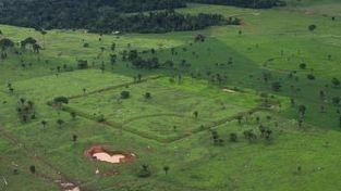 Géoglyphes en Amazonie (dr)