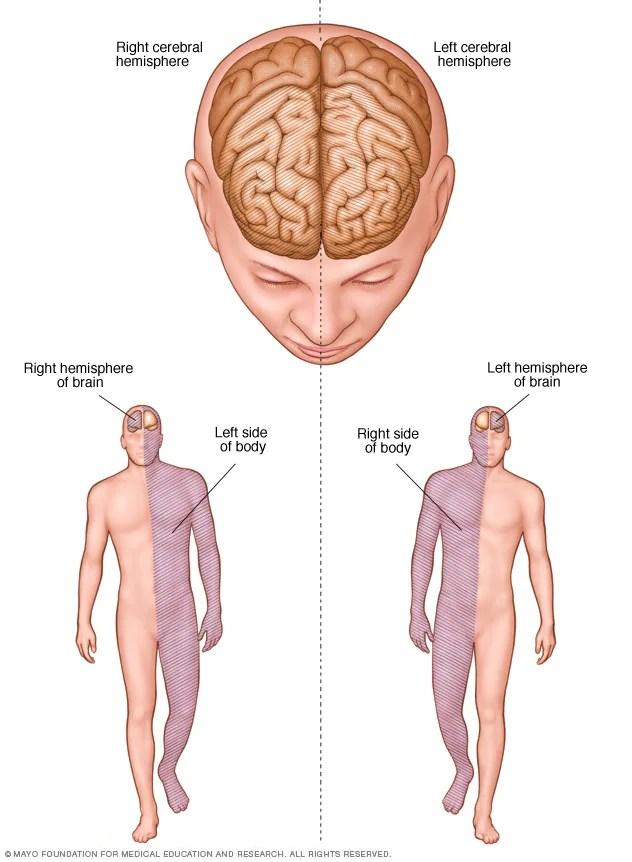 Conexões do hemisfério cerebral