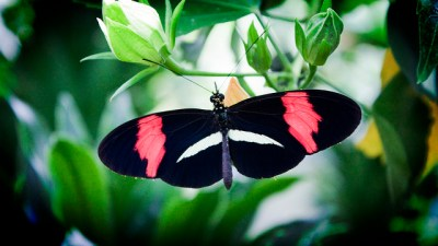 butterfly by Kuster & Wildhaber Photography