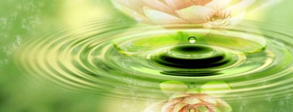 zen-water-drip-lotus-960x368