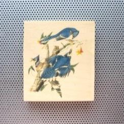 audobon bird drawings, audubon prints, blue jays, Cyanocitta cristata, toronto artist, avian home decor, ornithologist twitcher gifts, put a bird on it