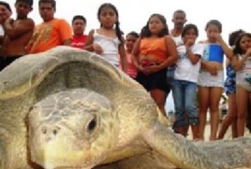 Tortugas Seguras en Mazatlan