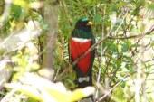 Conselva realiza seminario sobre monitoreo y conservación de aves
