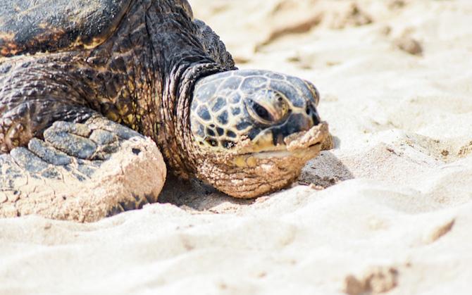 Freiwilligenarbeit Meeresschildkrötenprojekt mb care