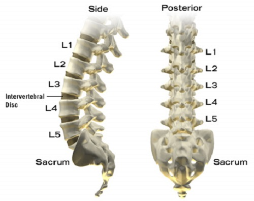 Image result for lumbar spine images