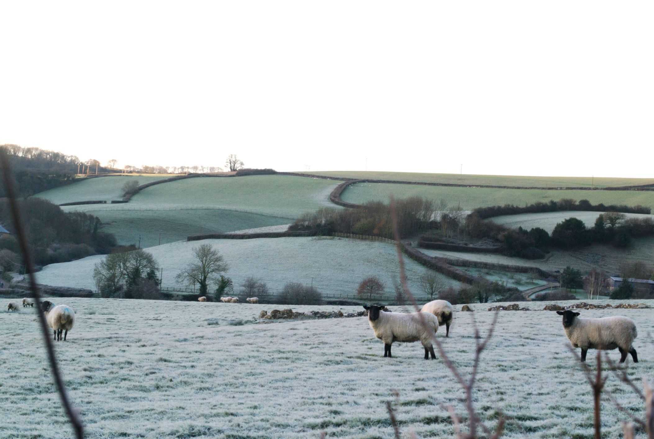 Protecting your smallholding this winter