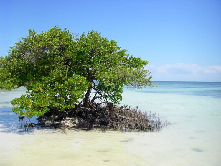 mangrove island at Anne's Beach in Florida Keys