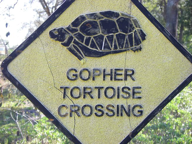 Gopher Tortoise crossing sign in Florida