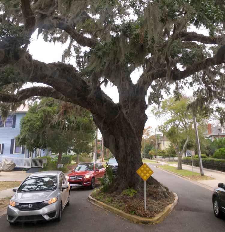 see Kate's Tree in historic Fernandina Beach FL