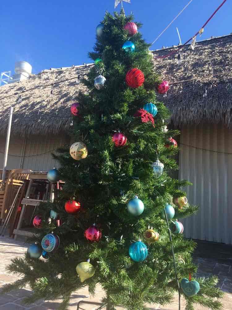 tropical Christmas tree at Kokonut Nut in Bradenton