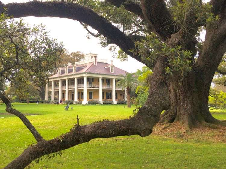 magnificent oak trees at Houmas House Plantation Louisiana