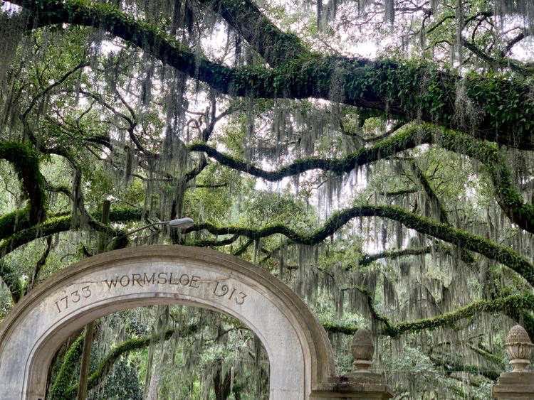romantic oak tree entrance of Wormsloe Historic Site