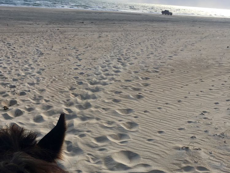 horse and car on beach in Cape Hatteras