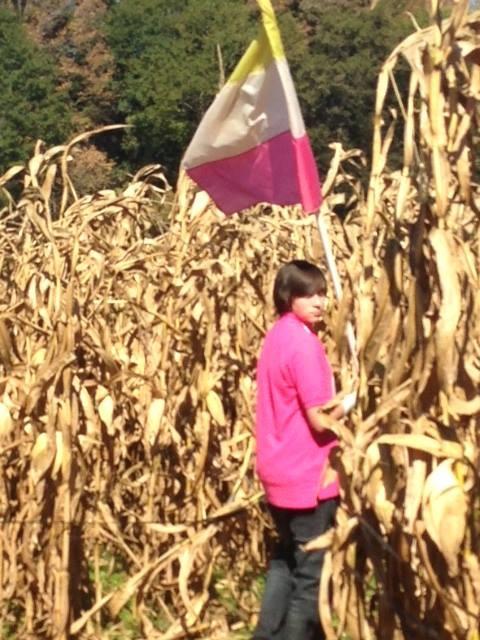 corn maze 2014