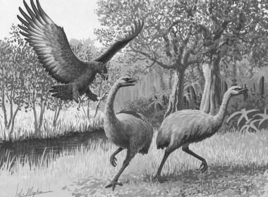 The Moa bird of New Zealand. (cfzaustralia.com)