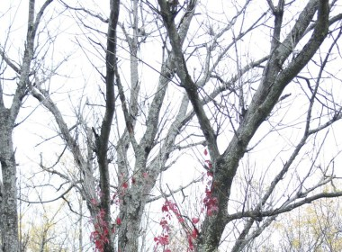 An autumnal tree. (Alexandra Allaire/ Photo Editor)