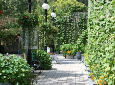McGill's Edible Campus has furnished the campus walls with exhuberant greenery.