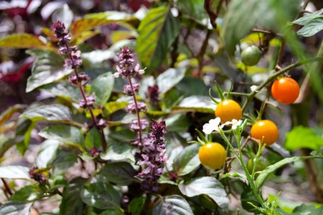 Natural & diverse garden